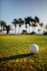 golf ball on green grass, palm trees on background