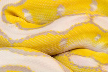 macro photo of a ball python skin