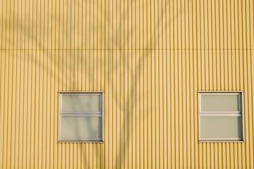 黄色い壁と木の影