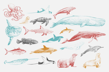 Illustration drawing style of marine life collection