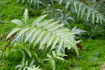Ferns in nature, cold air