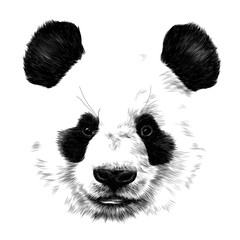 head Panda no outline in space sketch vector graphics monochrome drawing