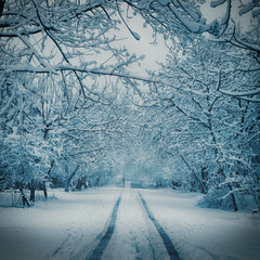 Beautiful Winter landscape background with snow covered trees and ice. Cold winter day in the park.