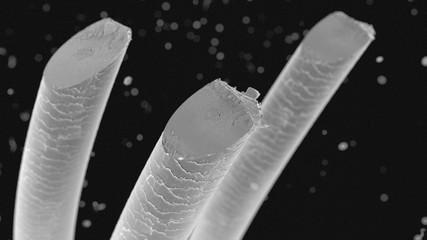 Menschliches Haar Mikroskopische Aufnahme 3D Illustration