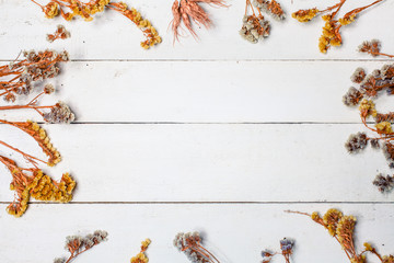 White background and dried flowers