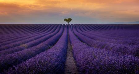 Fotobehang Lavendel Valensole - Champs de lavande
