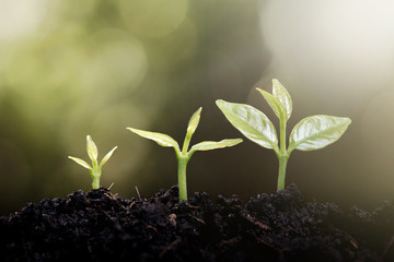 Young plant growing in the morning light and green nature bokeh background , new life growth ecology business financial concept ,Earth Day
