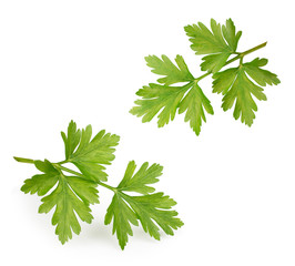 Celery or parsley leaves isolated on white background