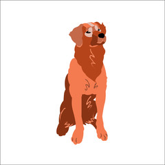 Retriever isolated on white background, vector illustration dog.