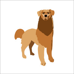 Golden retriever isolated on white background, vector illustration dog.