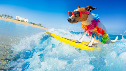 Poster Crazy dog dog surfing on a wave