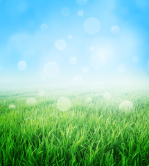 Springtime - Fresh green nature background