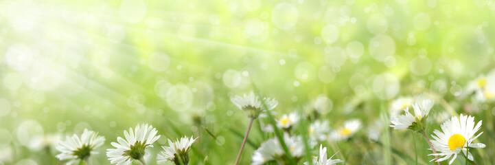 Frühling 421