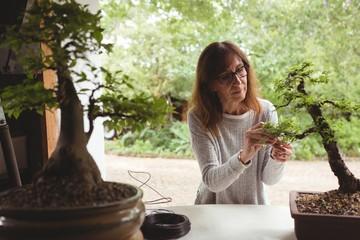 Woman checking plant