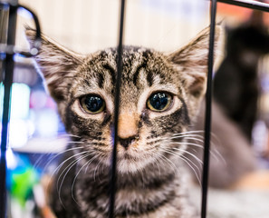 Portrait of one extremely sad tabby kitten with big glossy eyes in cage waiting for adoption