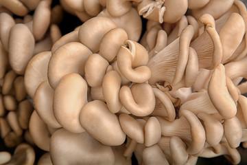 Fresh raw oyster mushrooms, closeup