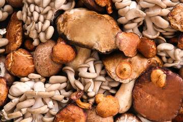 Many different mushrooms as background