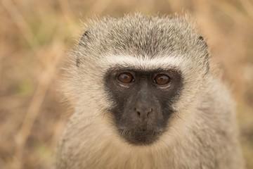 Monkey in safari park