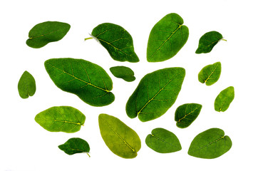 Wall Mural - Leaves Many leaves White background Isolate