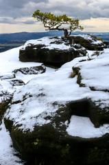 Eine Wetterkiefer auf dem Gipfel des Liliensteins in der Sächsischen Schweiz