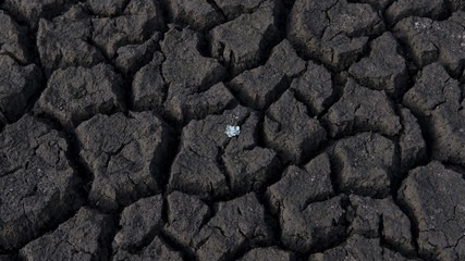 Background of cracked, arid soil with one small plant growing, damaged farmland raising major concerns about the climate change, feeding world's population, and finding alternative farming methods