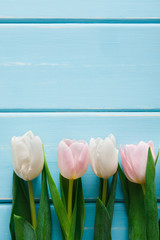 Fresh tulips on blue wood background, copy space
