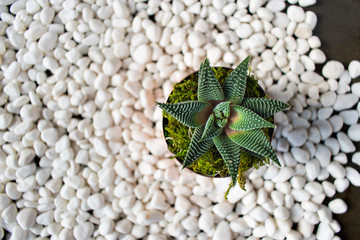 green succulent plant on white pebbles in desert zen setting top view
