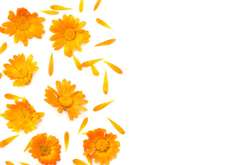 marigold flowers isolated on white background ( calendula flower ) top view