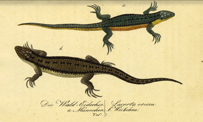 Illustration of a reptile.