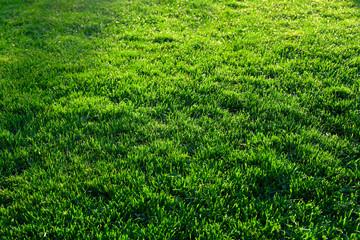 Grass meadow in sunlight