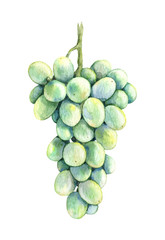Watercolor Bunch  Green  Grapes
