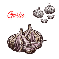 Garlic seasoning vector sketch plant icon