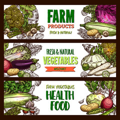 Vector sketch banners of farm organic vegetables