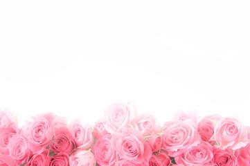 バラ 背景