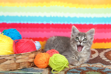 gray long haired tabby kitten laying on colorful carpet floor, looking directly at viewer with mouth wide open. Bright striped background, balls of yarn in a basket.