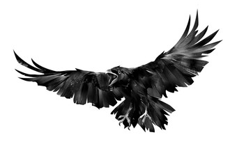 Wall Mural - painted flying bird of a raven on a white background