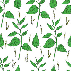 Seamless floral vector pattern, Nettle wild field flower isolated on white background, hand drawn sketch colorful illustration Urtica dioica for design package tea, cosmetic, natural medicine, textile