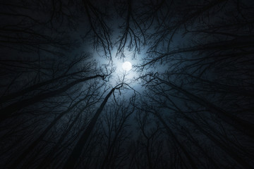 Beautiful night sky, the moon and the trees. Elements of this image furnished by NASA.