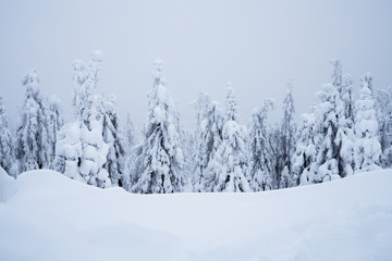 Scenic view of snow covered trees against cloudy sky in Koli National Park, Finland