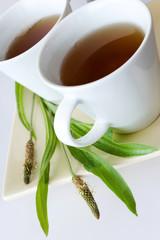 homemade remedy - herbal plantain tea (plantago lanceolata) - health care and medical treatment