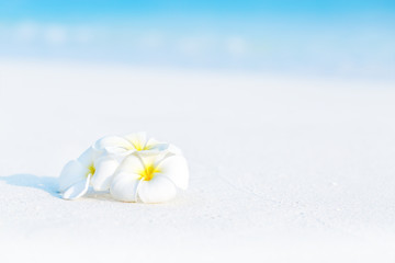 Spoed Fotobehang Frangipani White plumeria flowers on tropical beach