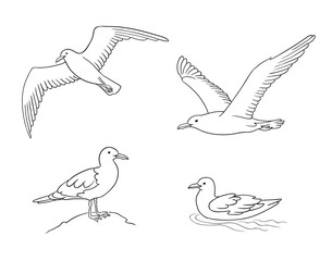 Seagulls in outlines - vector illustration