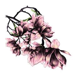a lush bouquet of flowers Magnolia sketch vector graphics color picture