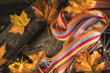 Multicolored scarf and yellow maple and oak leaves on the logs. Bright autumn background. Sunlight, copy space