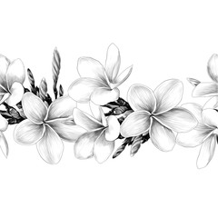 seamless strip of Magnolia flower sketch vector graphics monochrome drawing