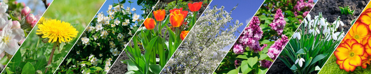 Spring flowers and flowering trees. Collage. Wide image.