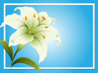 Border template with white lily