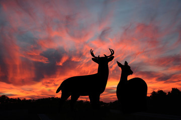 Buck and Doe Whitetail Deer Silhoetted Against A Spectacular Evening Sunset