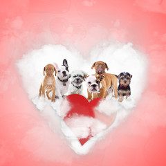 group of adorable puppies celebrating valentine's day