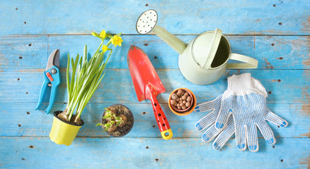 gardening tools and young  flowers, springtime gardening,flat lay